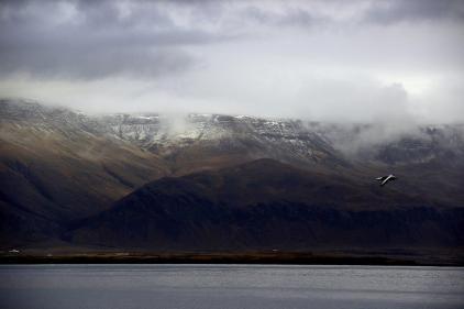 Island Reykjavík Esja