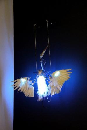 Nature Rewired Engelsvogel