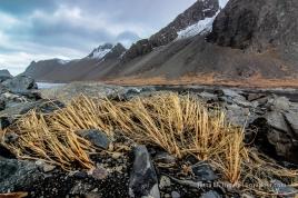 Kambhorn, Lava und Strandhafer