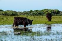 Naturreservat De Muj