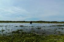 Jagdgründe für Wasserbüffel