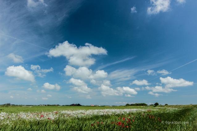 Texel-Mohn_MG_6273-2