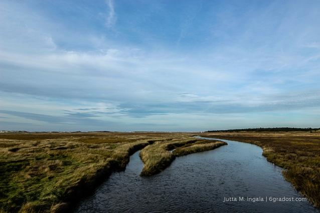 Paradies für Wasservögel: Salzwiesen