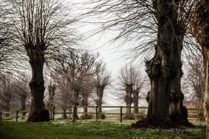 In Panker erzählen selbst die Bäume Geschichten