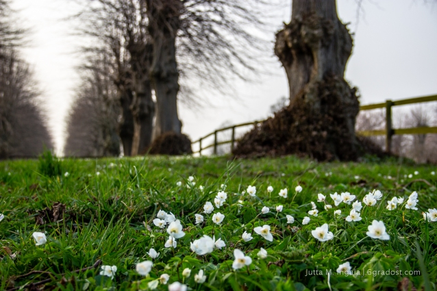 Frühlingserwachen an der Kapelle von Panker