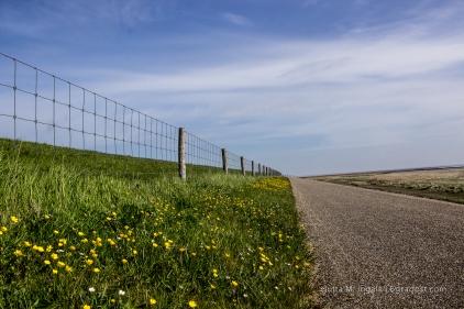 170 km Radwege gibt es auf Texel