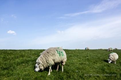 """""""Shocking green"""" auf weißem Pelz"""