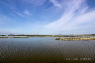 Nistplätze für zahlreiche Wattvogelarten