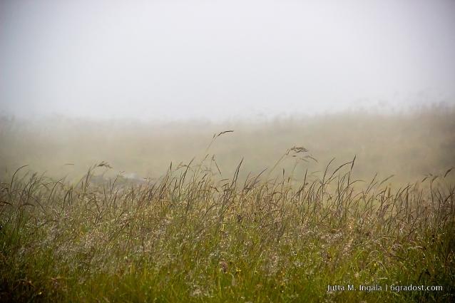 Typische Sicht: Nebel