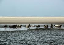 Noch mehr Robben