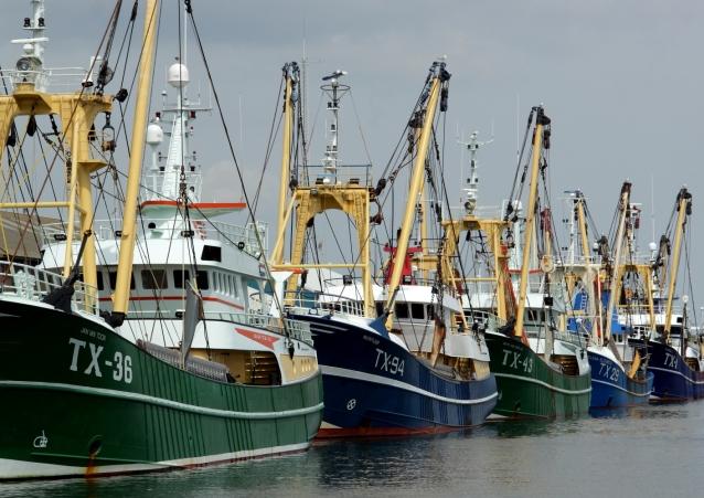 Flotte im Hafen von Oudeschild