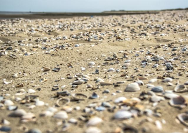 Meer aus Muscheln