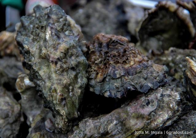 Archaisch: die Auster