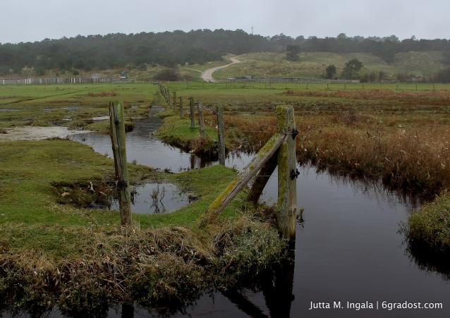 Zwischen Watt und Weide