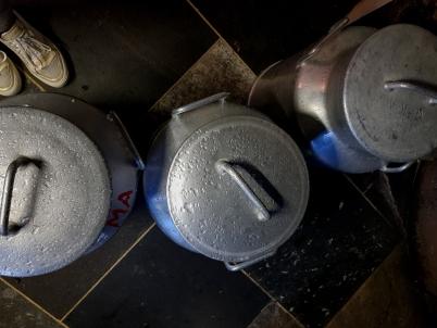 Rund 420 l Milch täglich