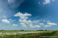 Jutta_Ingala_Niederlande_Texel_MG_6273