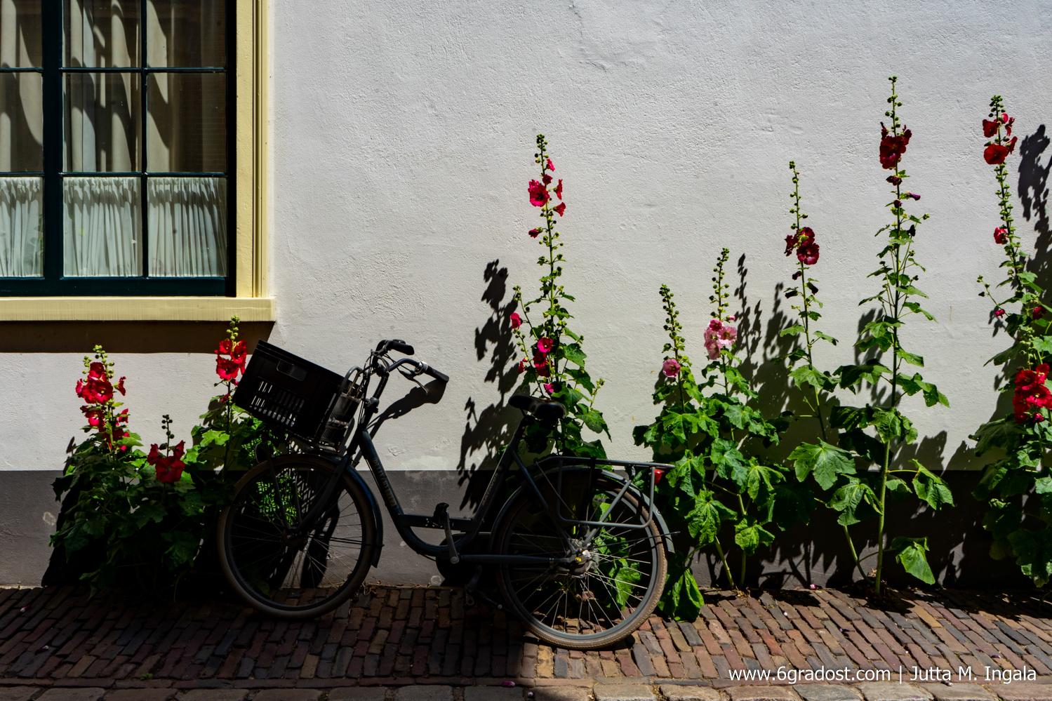 Typisch Niederlande: Fahrrad und Stockrosen