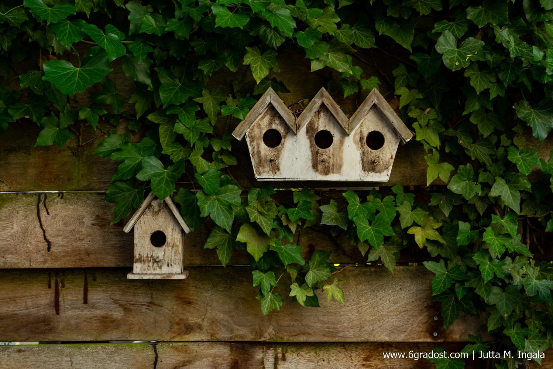 Charmante Reihenhäuschen. Vogelhaus in Zutphen